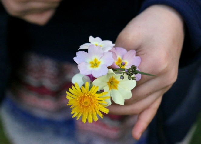Blume13